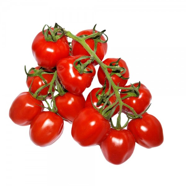 Papaletto Tomate